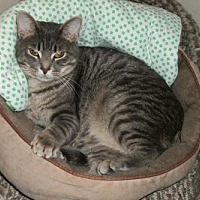 Adopt A Pet :: Shadow - Lacon, IL