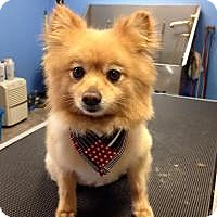 Adopt A Pet :: Porter - Mount Gretna, PA