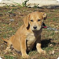 Adopt A Pet :: RORY - Bedminster, NJ
