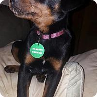 Adopt A Pet :: Pippi Longstocking - Nashville, TN