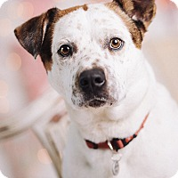 Adopt A Pet :: Brewster - Portland, OR