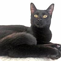 Adopt A Pet :: Sabrina - Orange, CA
