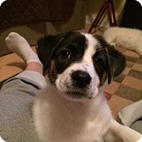 Adopt A Pet :: Liesel - Dayton, OH