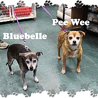 Adopt A Pet :: Pee Wee & Bluebelle - Fallston, MD