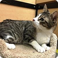 Adopt A Pet :: Meeko - Riverside, CA