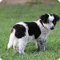 Adopt A Pet :: Ranch - Glastonbury, CT
