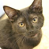 Adopt A Pet :: Jellybean - Medina, OH