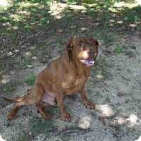 Adopt A Pet :: Buddy - Newnan City, GA