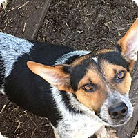Adopt A Pet :: Mack - Sudbury, MA