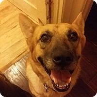 Adopt A Pet :: Sandy - BONITA, CA