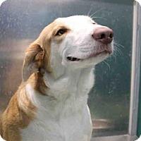 Adopt A Pet :: CHRISTINA - Wainscott, NY