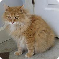 Adopt A Pet :: Leo - Mobile, AL
