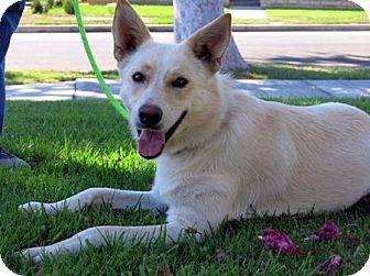 German Shepherd Dog Dog for adoption in Downey, California - Espie