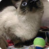Adopt A Pet :: Zoey - Visalia, CA