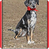 Adopt A Pet :: Gracie - Hillsboro, TX