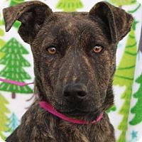 Adopt A Pet :: DAISY - Red Bluff, CA