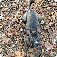 Adopt A Pet :: Rudolph - Windham, NH
