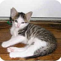 Adopt A Pet :: Pierre - Island Park, NY