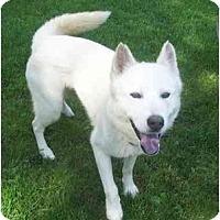Adopt A Pet :: Snow - Belleville, MI