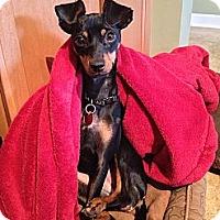 Adopt A Pet :: Sabrina - Nashville, TN