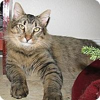 Adopt A Pet :: Miles - Davis, CA