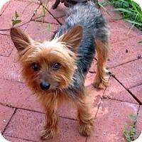 Adopt A Pet :: Lucas - West Palm Beach, FL