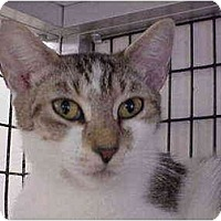 Adopt A Pet :: Dana - Deerfield Beach, FL