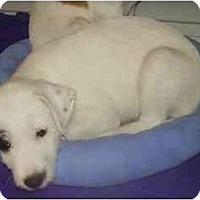 Adopt A Pet :: Krista - Miami, FL