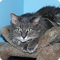Adopt A Pet :: Katie - North Branford, CT
