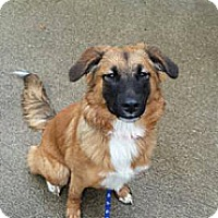 Adopt A Pet :: Lady ~ Adoption Pending - Youngstown, OH
