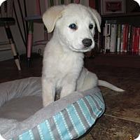 Adopt A Pet :: Frozen - Adopted! - Ascutney, VT