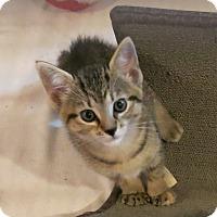 Adopt A Pet :: Misty Rain - Geneseo, IL