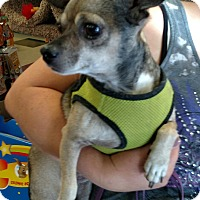 Adopt A Pet :: Buster - Gig Harbor, WA