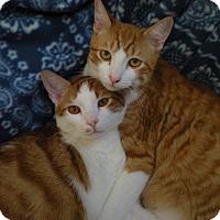 Adopt A Pet :: Maxwell-Oliver - Laguna Woods, CA