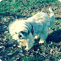 Adopt A Pet :: Coconut - Bridgewater, NJ