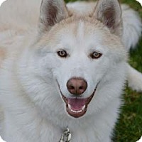 Adopt A Pet :: Nike - Irvine, CA