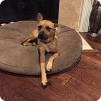 Adopt A Pet :: Idaho - Little Elm, TX
