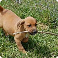 Adopt A Pet :: Doc - Manning, SC