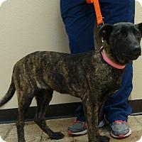 Adopt A Pet :: Mabel - Oviedo, FL