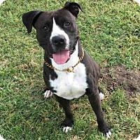 Adopt A Pet :: A490727 - San Bernardino, CA
