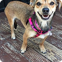 Adopt A Pet :: Eliza Doolittle - Los Angeles, CA