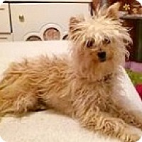 Adopt A Pet :: Bella-Adoption Pending - Boulder, CO