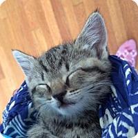 Adopt A Pet :: Aspen - Philadelphia, PA