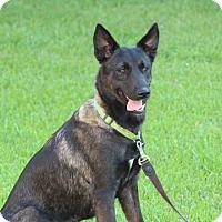 Adopt A Pet :: Lola - Humble, TX