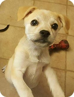 Terrier (Unknown Type, Medium) Mix Puppy for adoption in Tomah, Wisconsin - Jenny