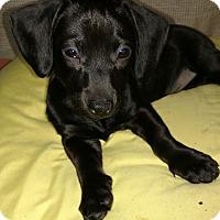 Adopt A Pet :: Jethro - San Diego, CA