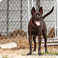 Adopt A Pet :: Lady Bug - Warner Robins, GA
