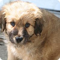 Adopt A Pet :: Eisenhower - Woonsocket, RI