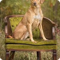 Adopt A Pet :: Jasmine - Terre Haute, IN