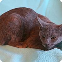 Adopt A Pet :: Elaina - Staunton, VA